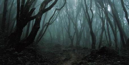 Las jest nasz