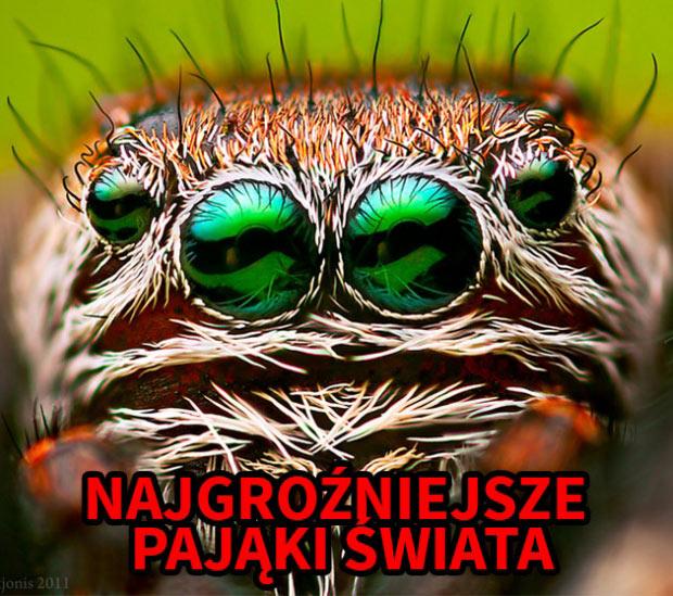 5 najbardziej niebezpiecznych pająków na świecie