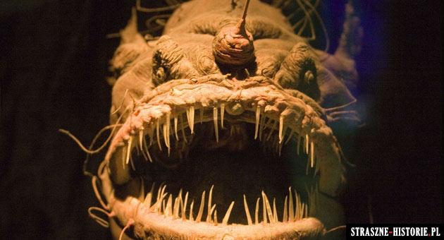 Najstraszniejsze i najohydniejsze ryby świata