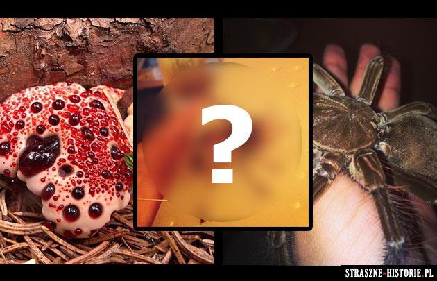 18 stworzeń niczym z koszmarów… które istnieją naprawdę!